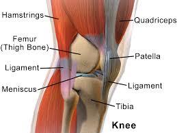 tendonitis knee symptoms